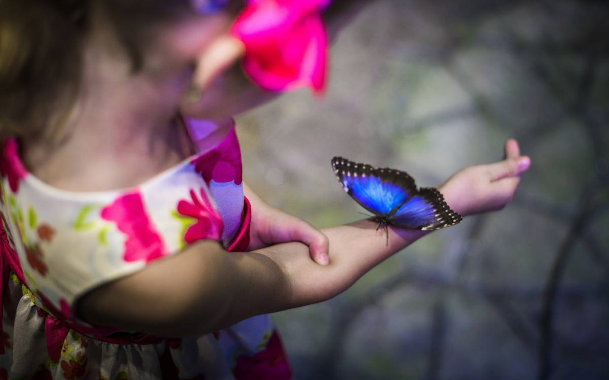 Papilonia – Motýlí dům